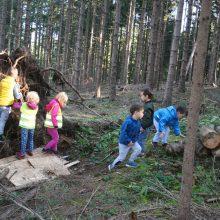 V gozdu 35 220x220 - SOVICE V NARAVI